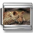 Leopard Panthera Photo Charm