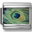 Peacock Feather Eye Photo Charm