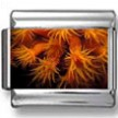 Orange Cup Corals Photo Charm